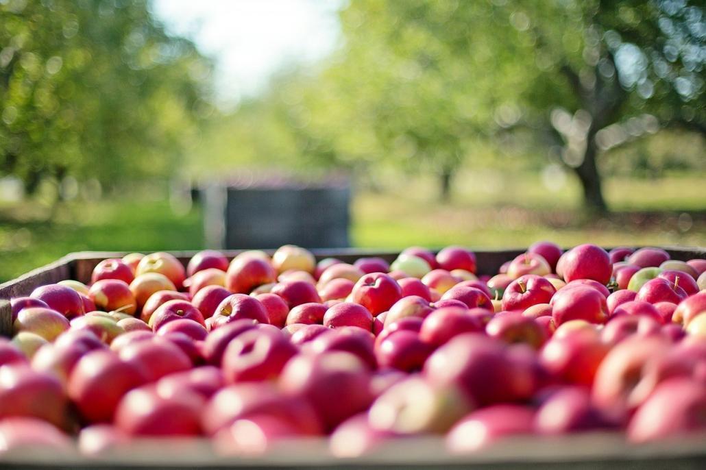alma A cider (almabor) egy erjesztett ital, amely általában almából készül, de előfordul körtéből, barackból, sárgabarackból és bogyókból készült változat is.