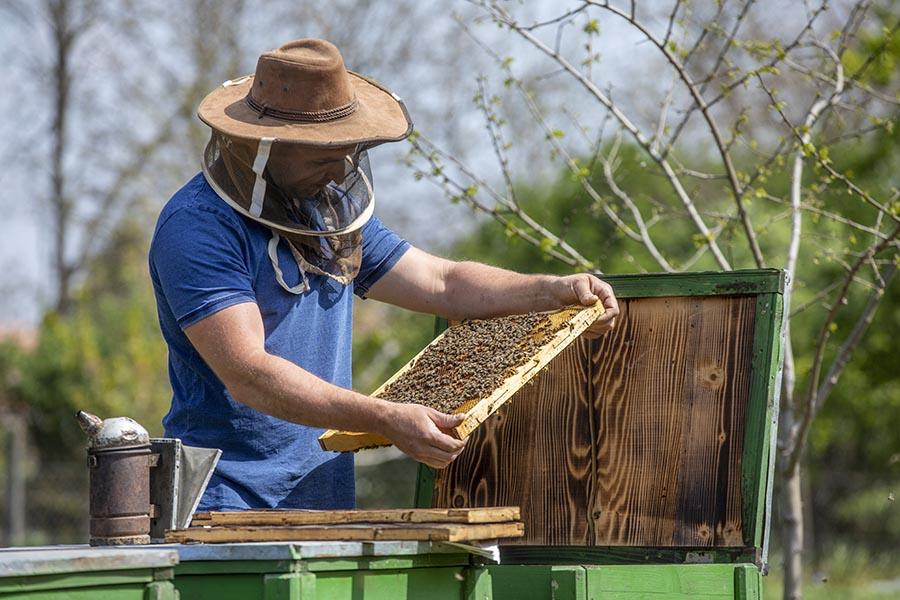 Nagyszénás, 2020. április 25. Valaczkai Tamás méhész dolgozik nagyszénási méhészetében 2020. április 25-én. (MTI)