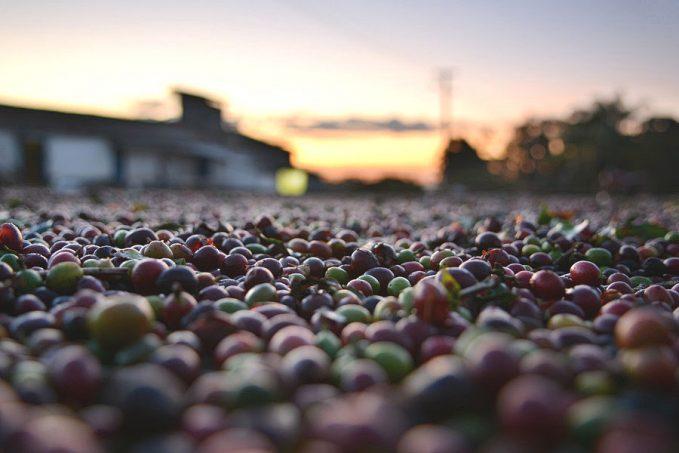 Csökkenő októberi kávéexport zsugorodó kávéárak mellett