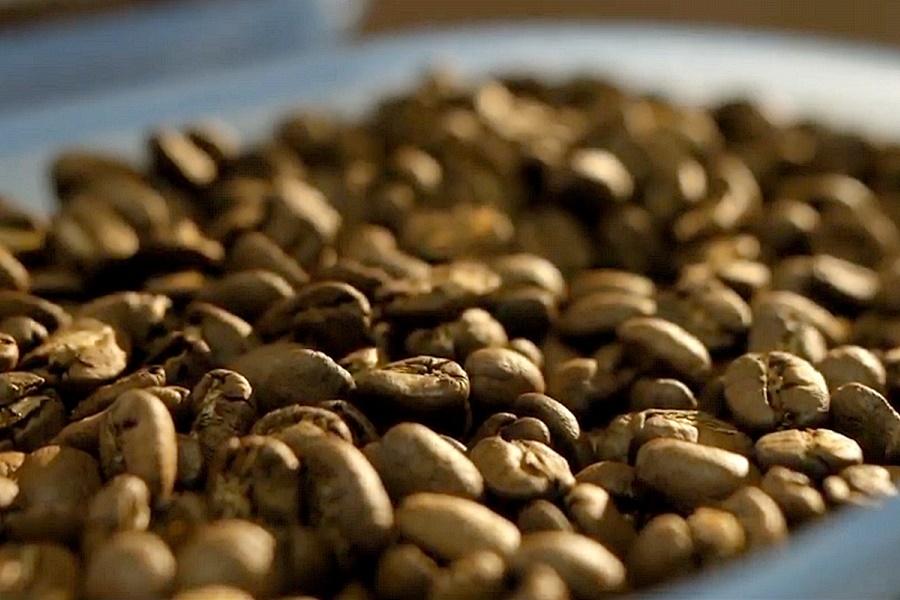 Professzionalis porkolesu kave Kipusztulás fenyegeti az Arabica kávéfajtát az ember miatt annak direkt és áttételes tevékenysége okán.