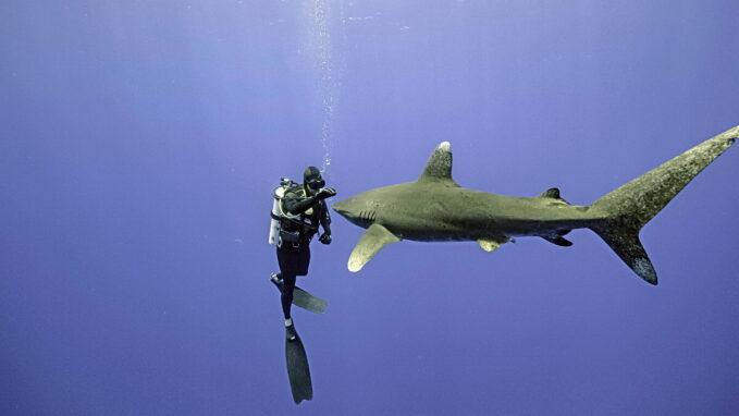 Cápafesztivál - Chris Hemsworth rajong a cápákért